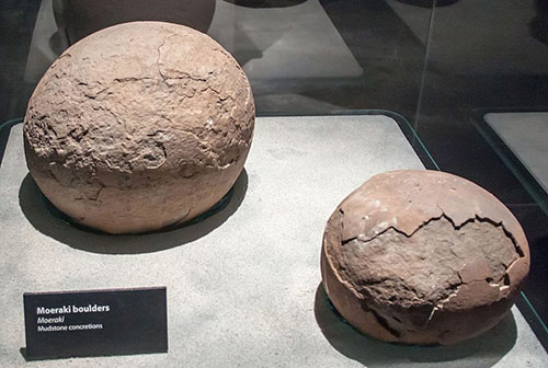 Small Moeraki boulders on display at the Otago Museum