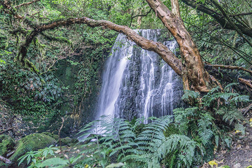 Walk to the Matai Falls in the Catlins NZ